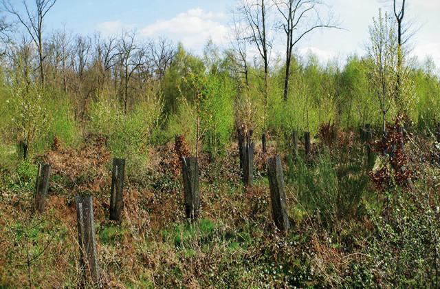 Forêts communales : des aides intéressantes pour 2021 !