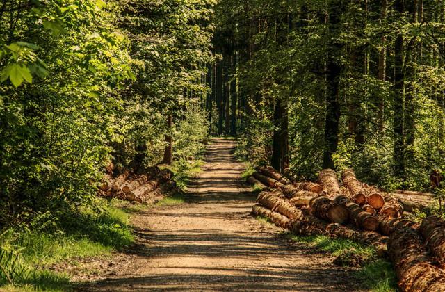 Plan de relance et mesures pour la filière forêt-bois