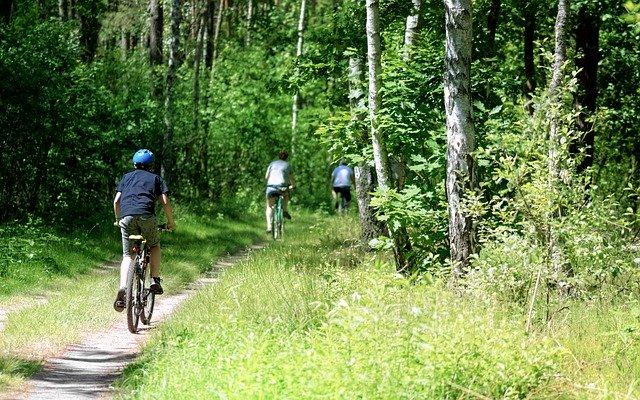 Social, balade en forêt