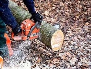 Photo filière forêt bois