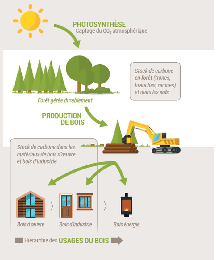 Ecosystème de forêt